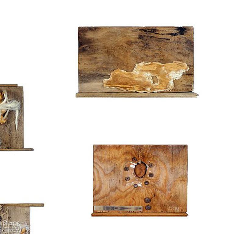 Wood equals paper - Conceptual Sculpture by Dianne Baker