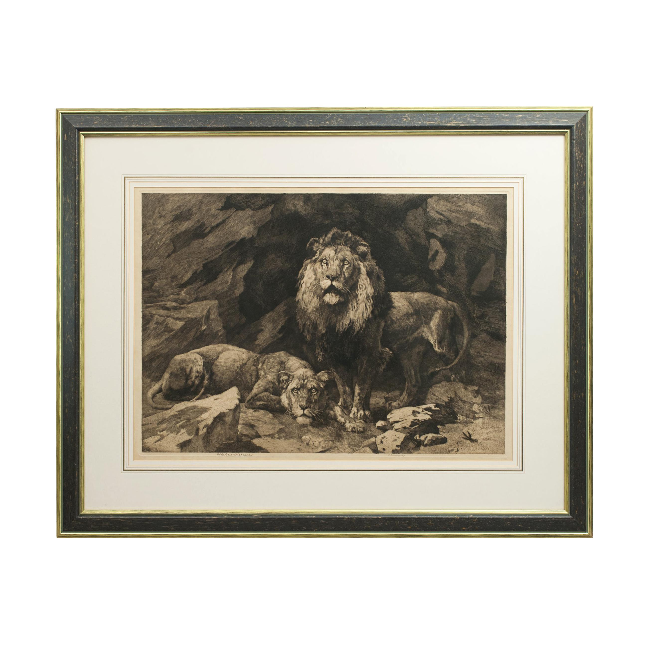 Dicksee Herbert, Etching of Lion and Lioness, Roused, Signed in Pencil