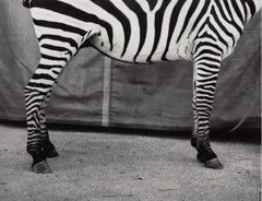 Untitled (Zebra), Silver Gelatin Print, Dietmar Busse, Contemporary Photography