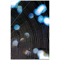 Blue Spider Web Digital Photograph Print by Dave Lasker