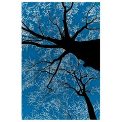 Winter Tree Silhouette on Blue Digital Photographic Print by Dave Lasker