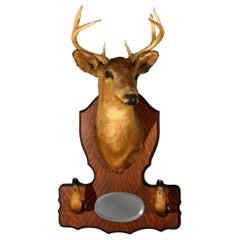 DIMS Vintage Taxidermy Deer Mount Hat Rack with Mirror, circa 1940