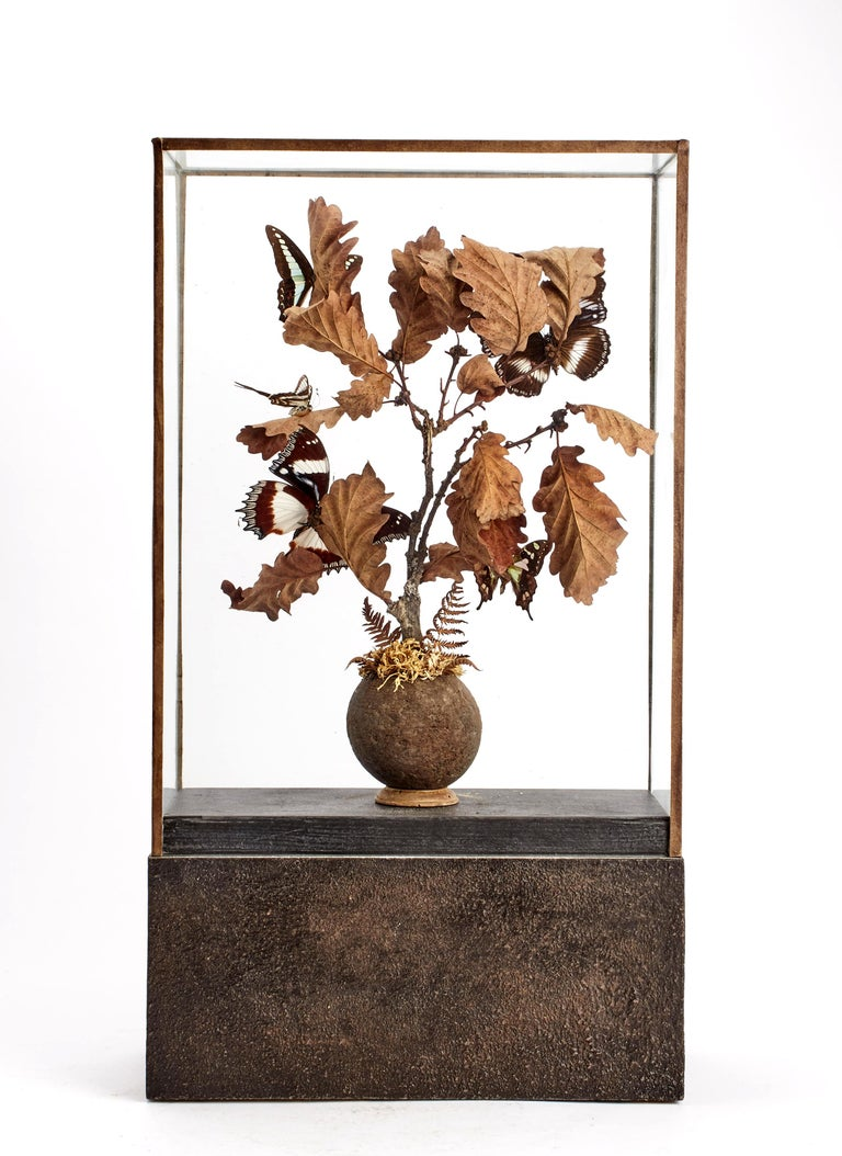Late 19th Century Diorama with Butterflies and Flowers, Italy, 1870 For Sale