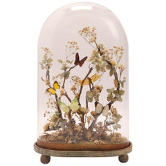 Diorama with Butterflies and Flowers, Italy 1870