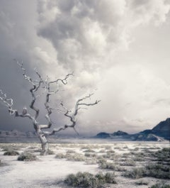 The Lonely Tree, Photograph, Archival Ink Jet
