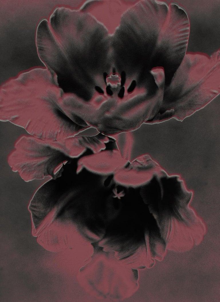 Don Freeman Graphic Tulips - Photograph by Don Freeman