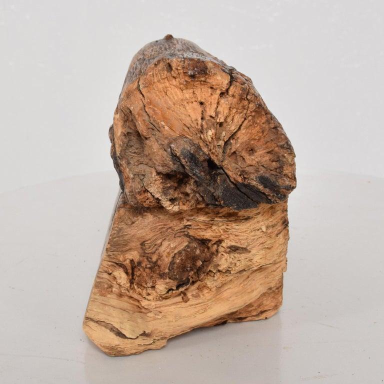 Don Shoemaker Organic Modern Handsome Exotic Wood Stash Box Carved Cocobolo 1970 For Sale 2