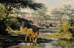 Lions. Evening drink. Wildlife artist and campaigner of international reputation