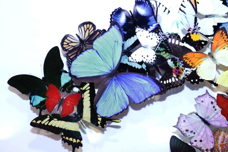 Contemporary Double Chanel Butterflies Glass Box Frame Wall Decoration For Sale