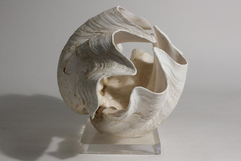 20th Century Double Matching Tridacna Gigas Clam Shell on Lucite Base Nautical Sculpture For Sale