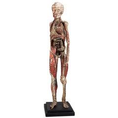 Dr Auzoux Anatomical Model, circa 1880