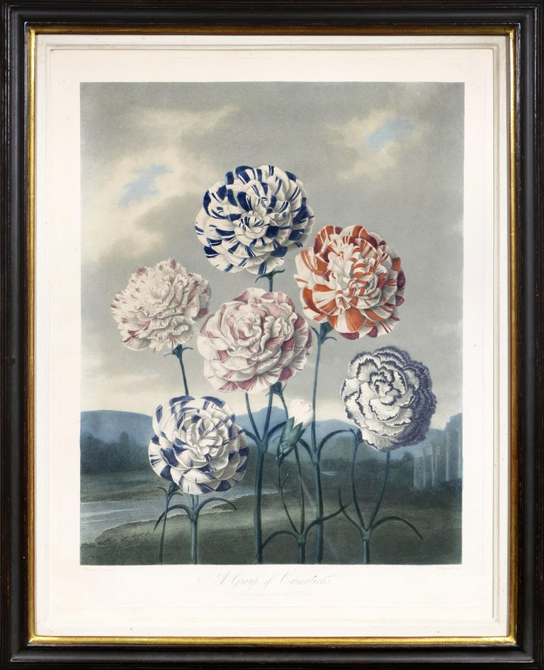 Dr. Robert John Thornton Still-Life Print - THORNTON. Group of Carnations