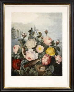 Thornton, The Roses, Aquatint finished by hand, 1799