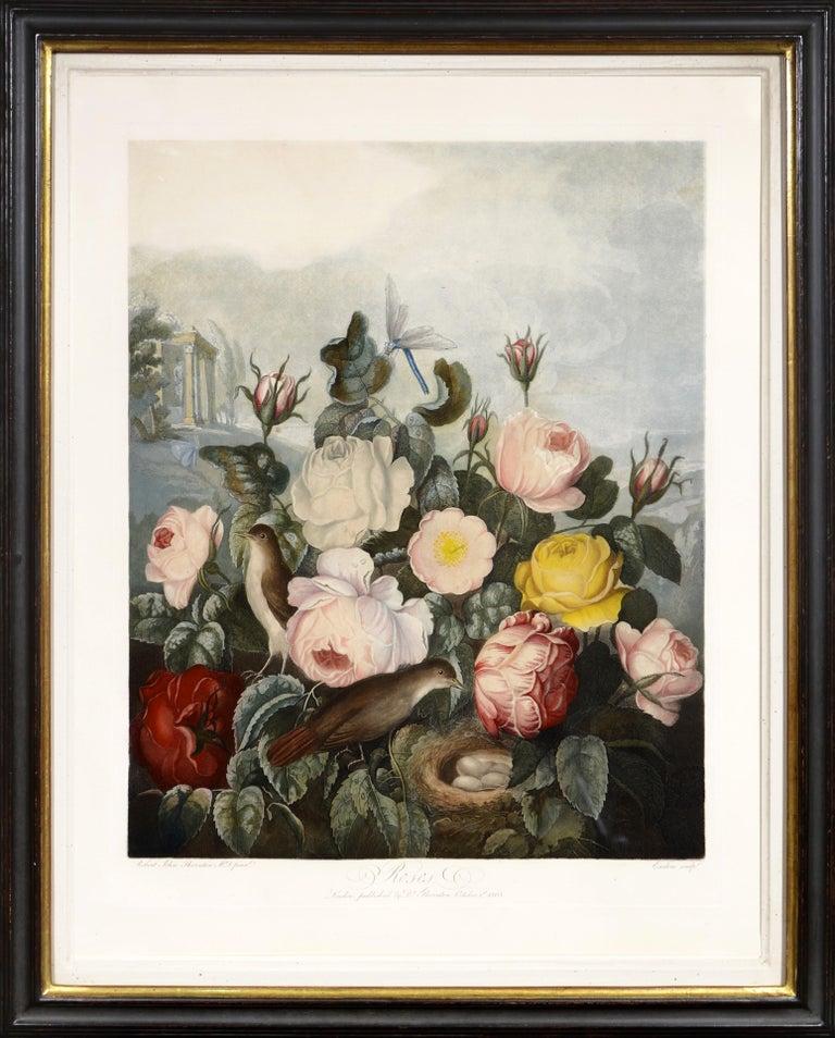 Dr. Robert John Thornton Still-Life Print - THORNTON. The Roses