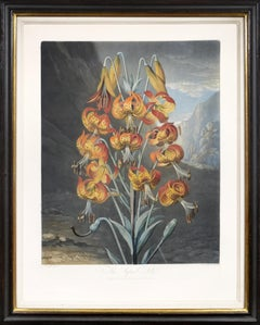 Thornton, The Suberb Lily, Aquatint finished by hand, 1799