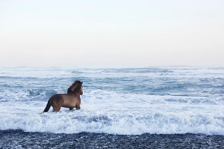 Drew Doggett Portrait Photograph - Award-winner,  Iceland, Stallion Looking Out Over the Glacial Sea