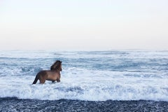 Award-winner,  Iceland, Stallion Looking Out Over the Glacial Sea