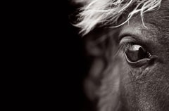 Close-Up Profile Portrait of a Sable Island Horse, Iconic, Meditative