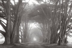 Cypress Tree Tunnel, Black and White Photography, Timeless, Americana