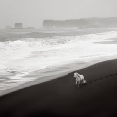 Ethereal Aerial Image of a Lone White Horse on the Black Sand Beach