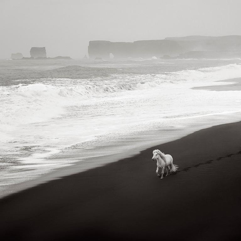 Drew Doggett Color Photograph - Ethereal Aerial Image of a Lone White Horse on the Black Sand Beach