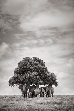 Group of Elephants Underneath a Tree, Africa, Vertical, Wild Animals