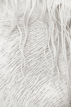 Intimate, Design-Inspired Detailed Image of an All-White Camargue Horse