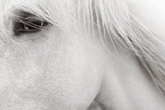 Intimate Portrait of an Iconic White Camargue Horse, France, Ethereal, Calming