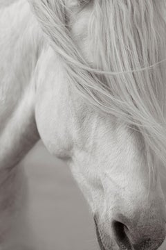 Intimate Portrait of an Iconic White Camargue Horse, France, Vertical, Ethereal