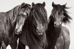 Intimate Portrait of Iconic Wild Horses on Sable Island, Equestrian, Horizontal