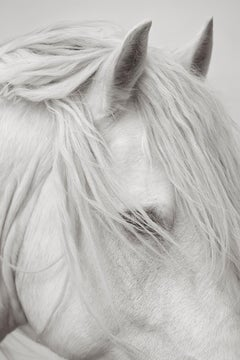 Portrait of a White Horse, Black and White Photography, Ethereal, Fashion