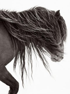 Portrait of a Wild Horse on Sable Island, Fashion-Inspired, Vertical, Equestrian