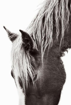 Profile Portrait of a Wild Horse on Sable Island With Light Mane, Vertical
