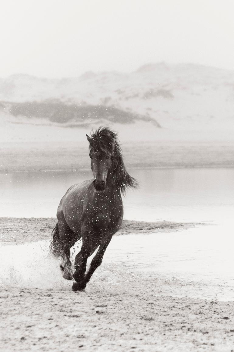 Drew Doggett Running Wild Horse On Sable Island Black And White Photography Equestrian For Sale At 1stdibs