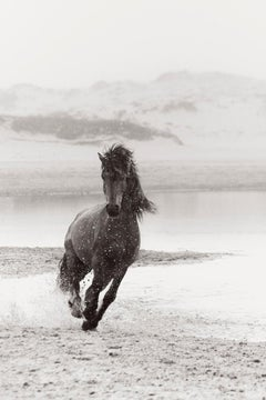 Running Wild Horse on Sable Island, Black and White Photography, Equestrian