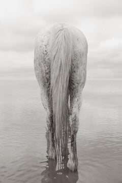 Portrait of an All-White Horse in Camargue, France, Vertical, Ethereal