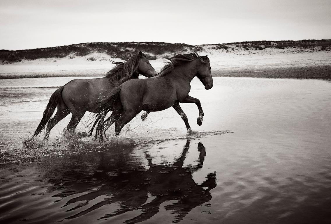 Drew Doggett Two Wild And Famous Horses On Sable Island Black And White Photography Horizontal For Sale At 1stdibs