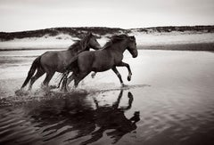 Two Famous Sable Island Wild Horses, Black and White Photography,  Horizontal