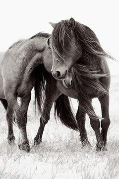 Two Wild Horses on Sable Island Nuzzling, Calming, Vertical, Ethereal