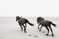 Two Wild Horses Running on the Beach, Minimalist, Horizontal, Equestrian