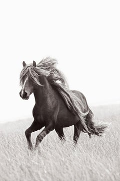 Unbelievable Wild Horse With Beautiful Mane, Iconic, Vertical