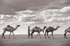 Warrior in Kenya Leading Camels Across Desert, Horizontal, Iconic