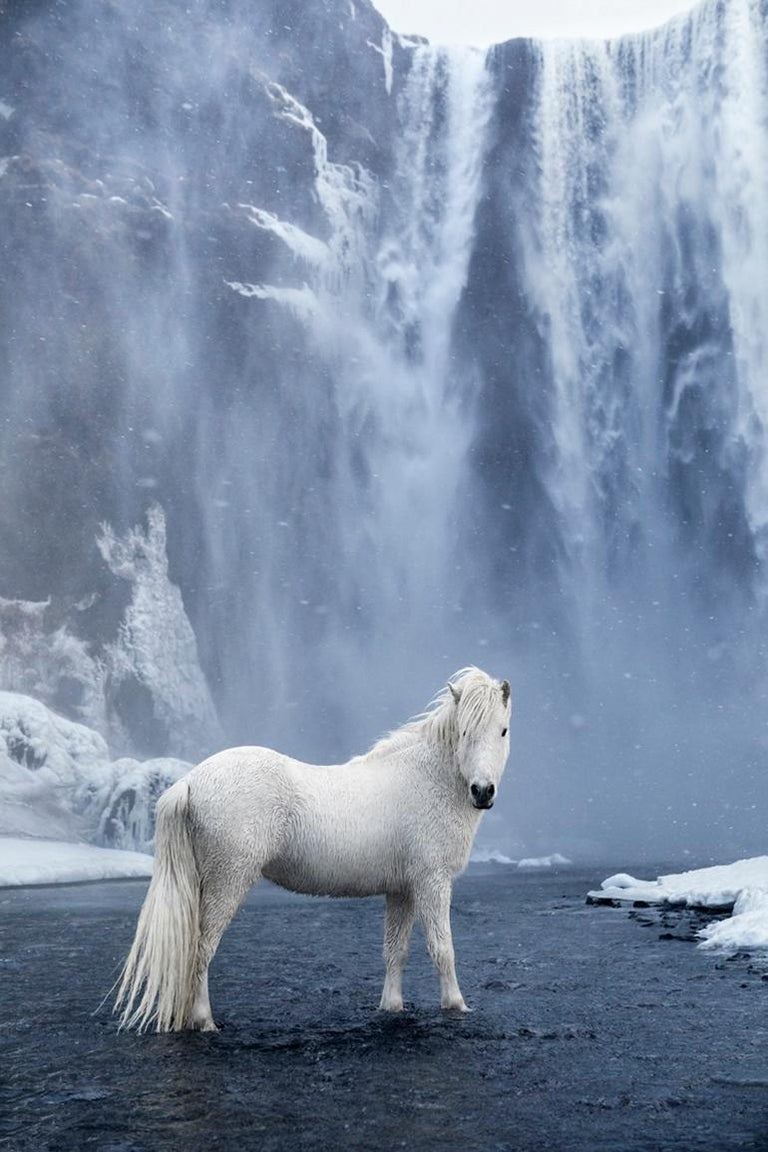 """Unbridled""  In this vivid and best selling image, a lone white Icelandic horse stands calmly beneath the famous waterfall Skogafoss.   Set against Iceland's iconic backdrop, the print series In the Realm of Legends highlights a noble yet rugged"