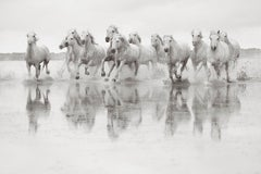White Horses in the South of France, Black and White Photography, Horizontal