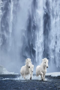 White Horses Running Beneath a Waterfall in Iceland, Color Photography, Vertical