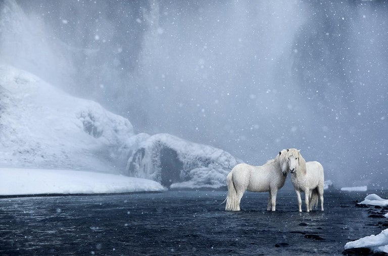 Drew Doggett Portrait Photograph - White Horses Standing Beneath a Waterfall, Color Photography, Horizontal