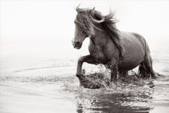 Wild Horse Walking Through Water with Mane Blowing in Wind, Best-Selling Print