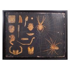 Dutch School House Science Class Scroll of Spider Anatomy, c.1930-1950