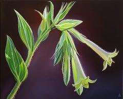 """Morning Light"" Green Flowered Macromeria, X Diamond Ranch, Arizona"