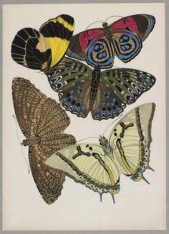 Butterfly Pochoir Prints - 11